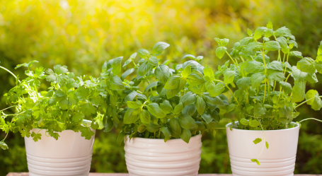 Picture of herbs